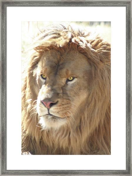 I Am .. The Lion Framed Print