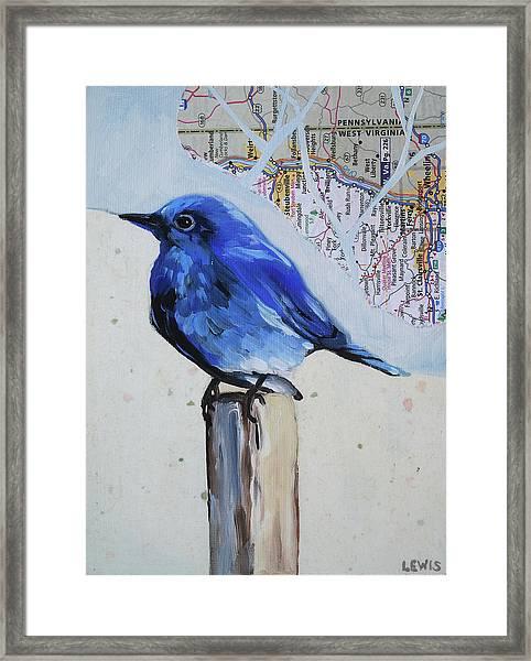 Blue Bird Framed Print by Anne Lewis