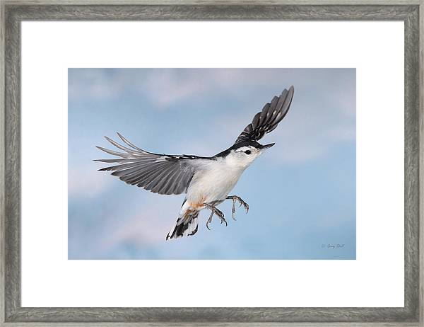 Landing Gear Down Framed Print