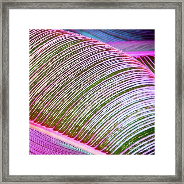 Leaves In Color  Framed Print