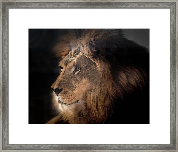 Lion King Of The Jungle Framed Print