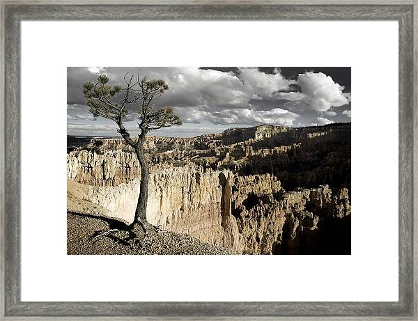 Lone Tree Canyon Framed Print