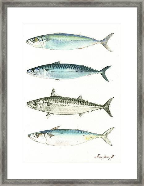 Mackerel Fishes Framed Print
