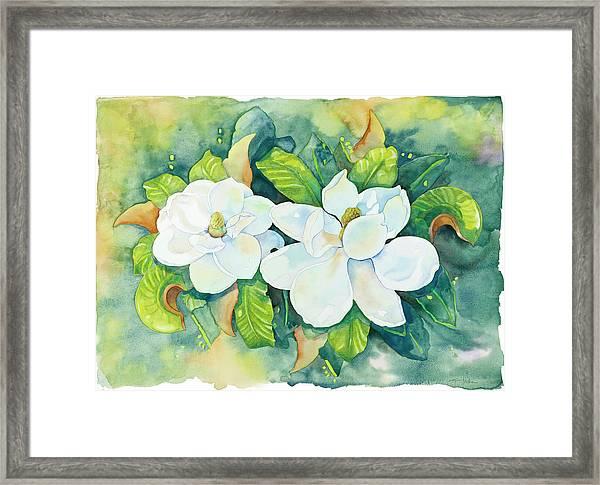 Magnolias Framed Print by Cathy Locke