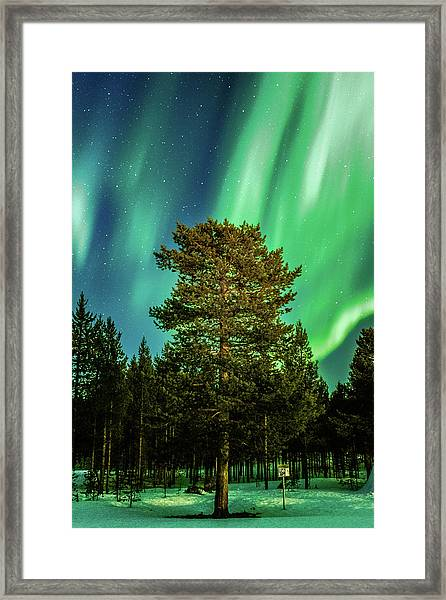 Majestic Tree Under The Northern Lights Karasjok Norway Framed Print