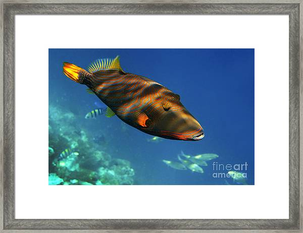 Framed Print featuring the photograph Maldives by Juergen Held