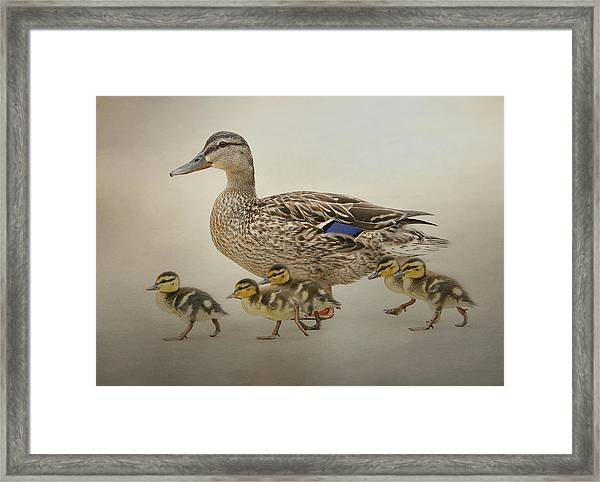 March Of The Ducklings Framed Print