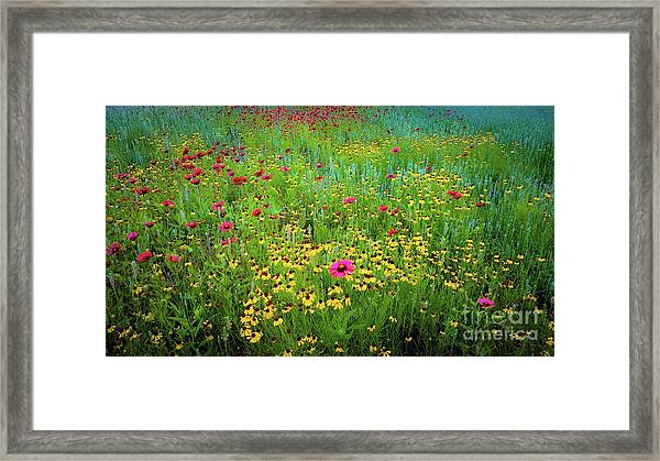 Mixed Wildflowers In Bloom Framed Print