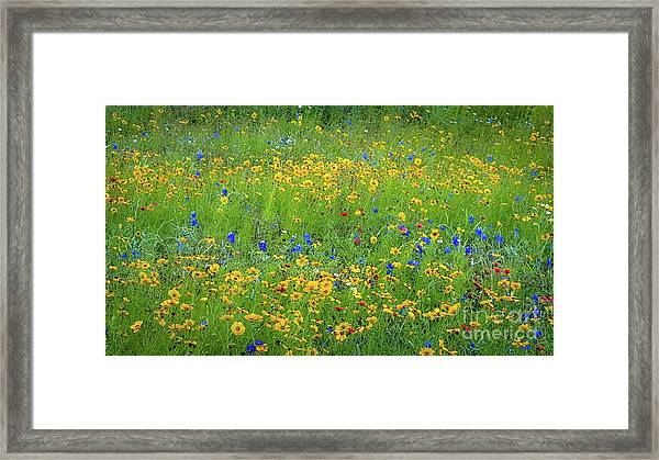 Mixed Wildflowers In Texas 538 Framed Print