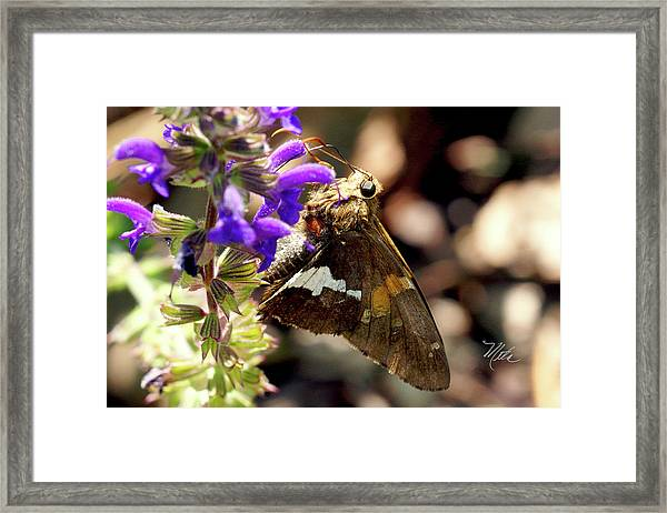 Moth Snack Framed Print