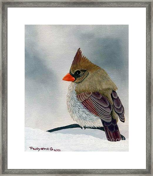 Mrs. Cardinal Framed Print