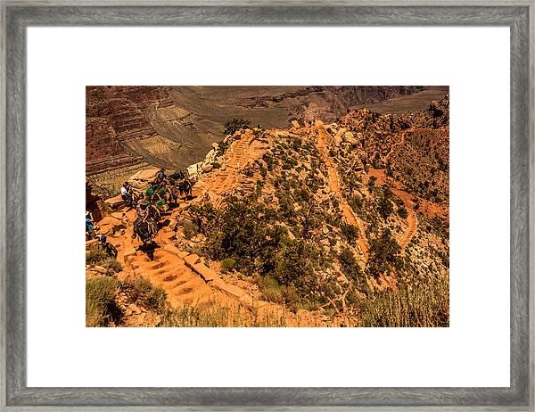 Framed Print featuring the photograph Mule Train In Grand Canyon by Claudia Abbott