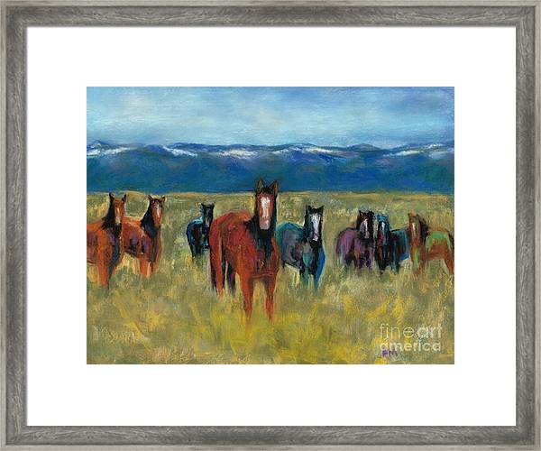 Mustangs In Southern Colorado Framed Print