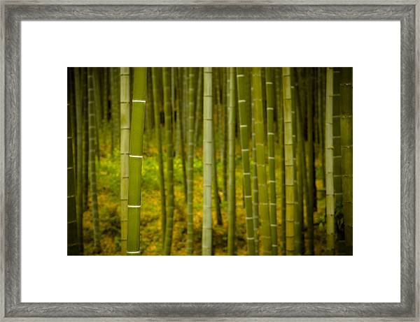 Mystical Bamboo Framed Print