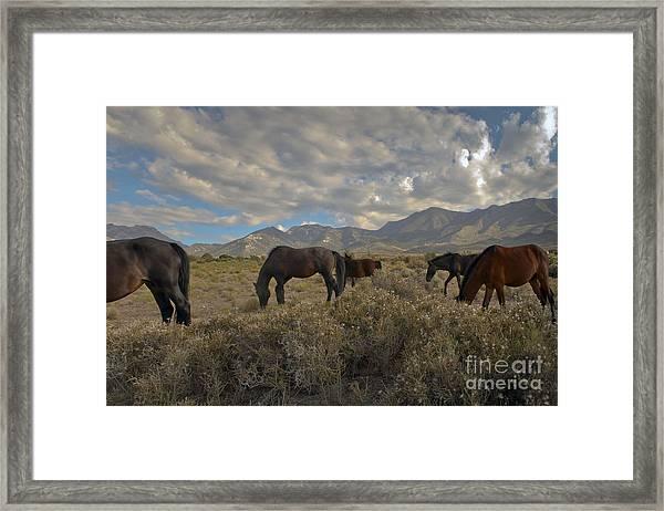 Nevada Framed Print by Glenn Vidal