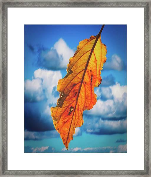October Leaf B Fine Art Framed Print