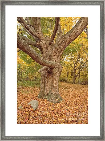 Odiorne Point State Park - Rye New Hampshire Framed Print