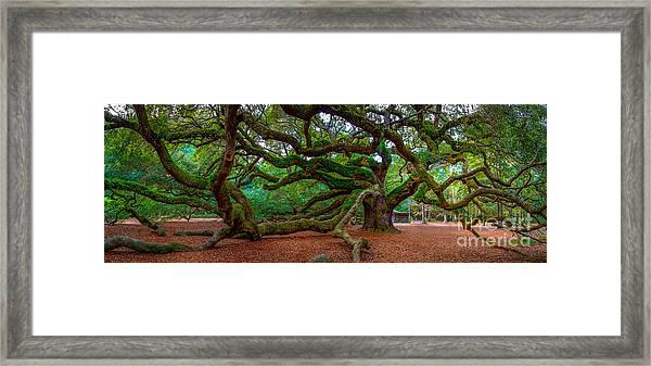 Old Southern Live Oak Framed Print