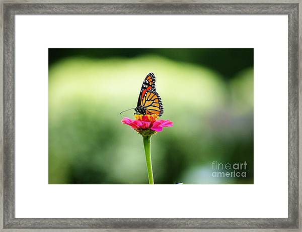 On My Own Framed Print