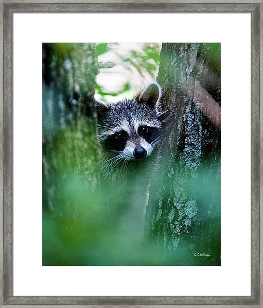On Watch Framed Print