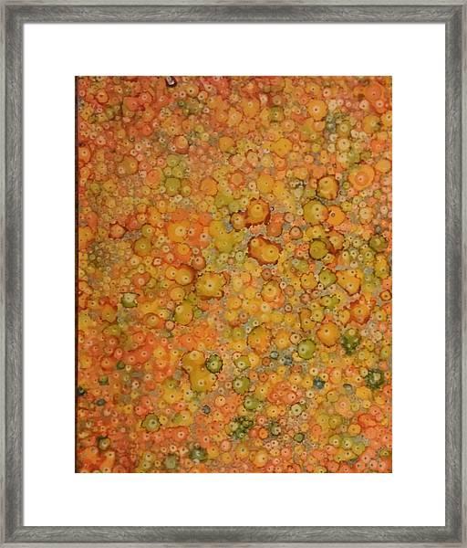 Orange Craze Framed Print