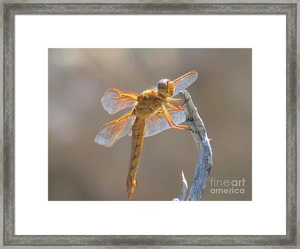 Dragonfly 5 Framed Print