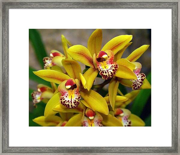 Orchid 9 Framed Print