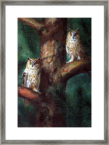 Owls In Moonlight Framed Print