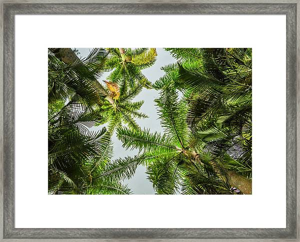 Palm Trees And Blue Sky Framed Print