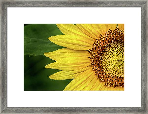 Partial Sunflower Framed Print