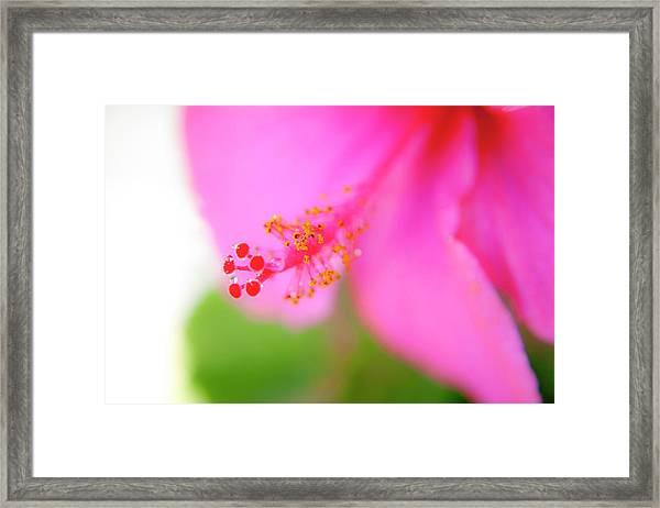 Pastel Droplets Framed Print