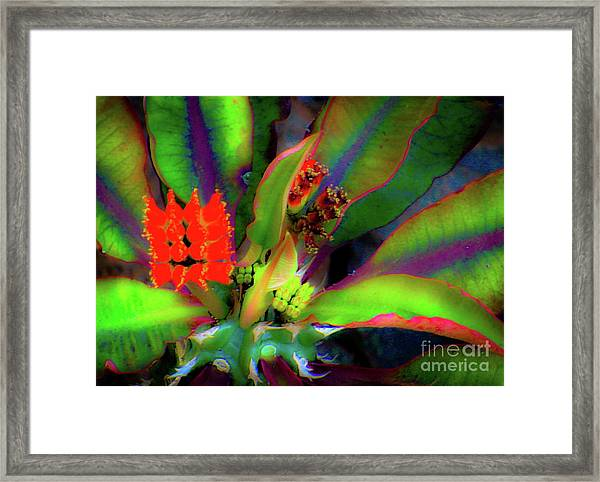 Plants And Flowers In Hawaii Framed Print