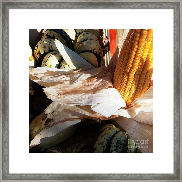 Pumpkin And Corn Framed Print