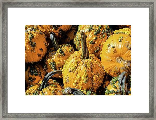 Pumpkins With Warts Framed Print