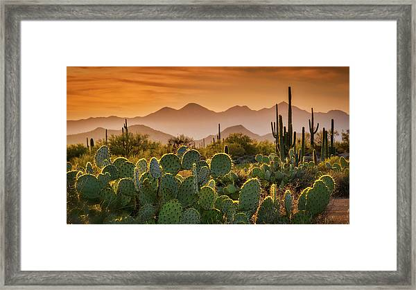 Pure Sonoran Gold  Framed Print
