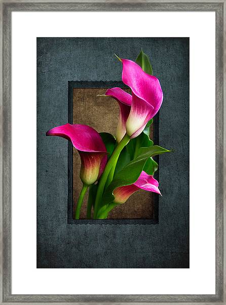Purple Calla Lily Framed Print