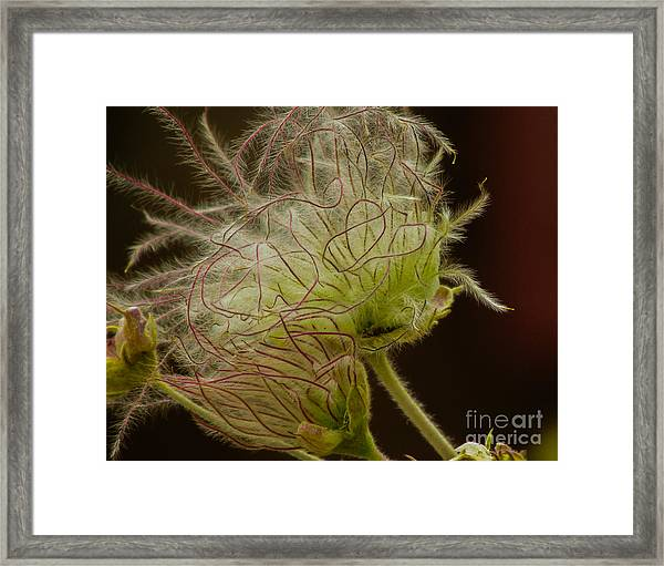 Quirky Red Squiggly Flower 3 Framed Print