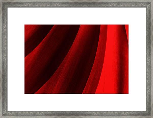Red Chrysanthemum Dawn Rising Framed Print