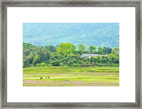 Rural Scenery In Spring Framed Print