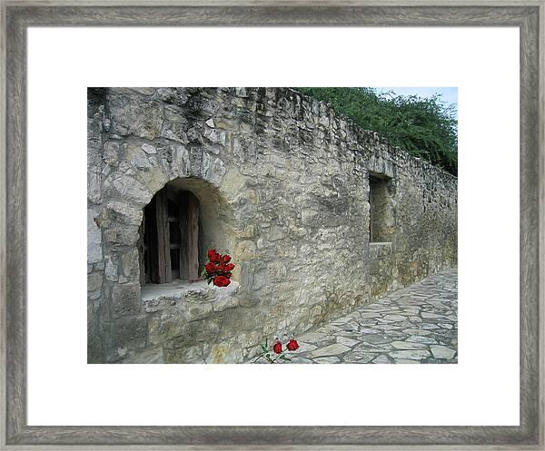 San Antonio Rose Framed Print