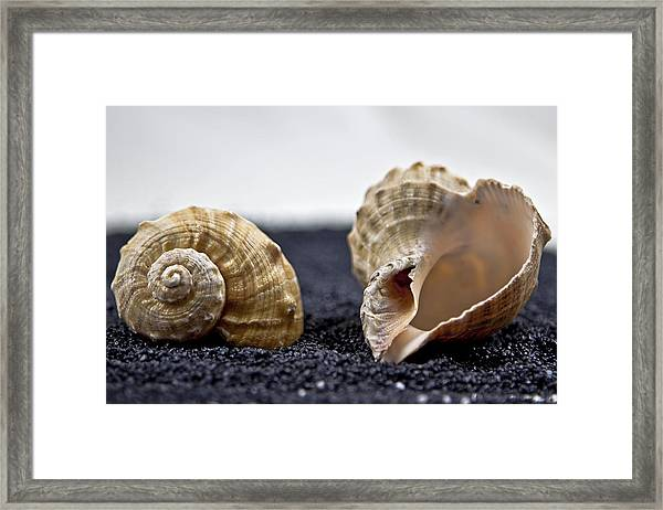 Seashells On Black Sand Framed Print