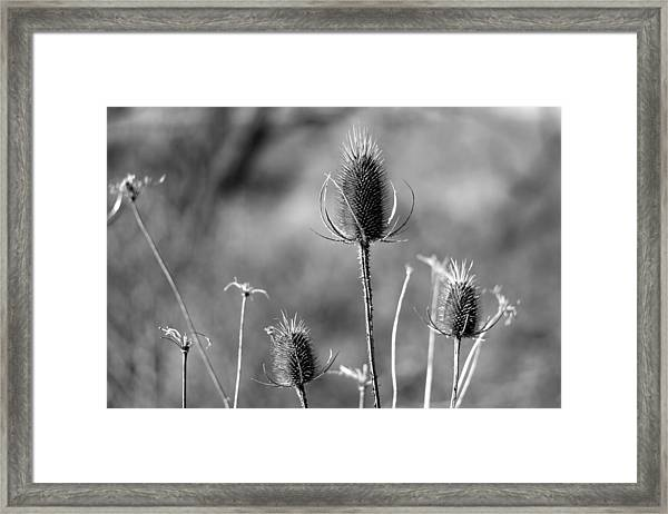 Simply Thistle Framed Print