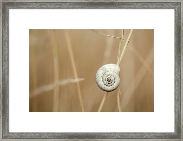 Snail On Autum Grass Blade Framed Print