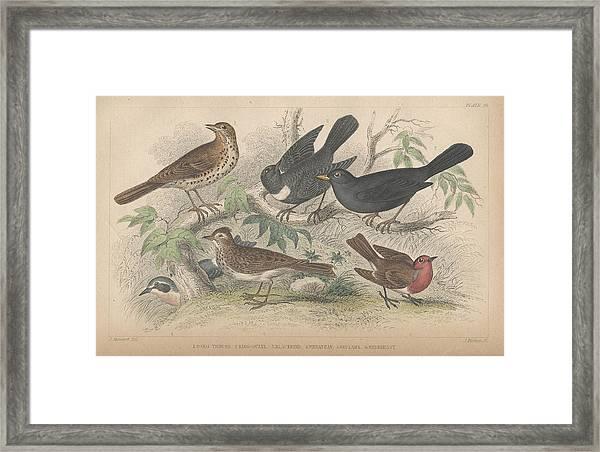 Songbirds Framed Print