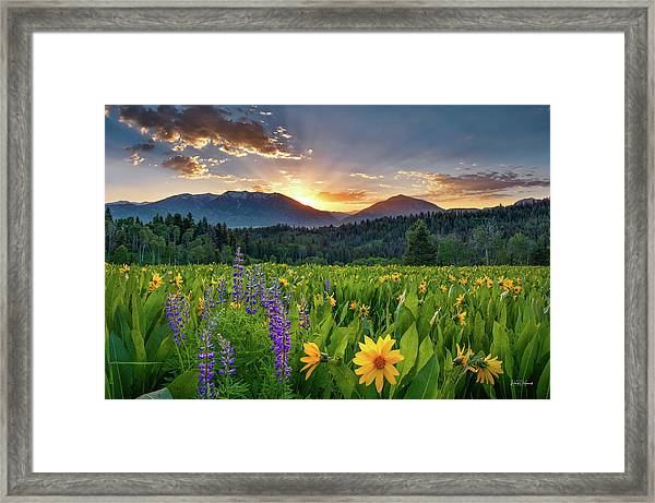 Spring's Delight Framed Print by Leland D Howard