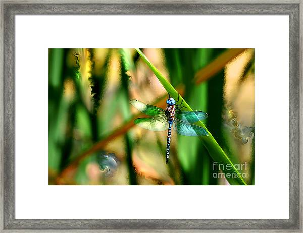 Stained Glass Dragonfly Framed Print