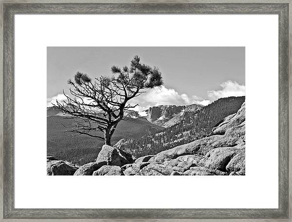 Standing Tall Framed Print by James Steele