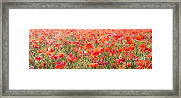 Summer Poetry Framed Print