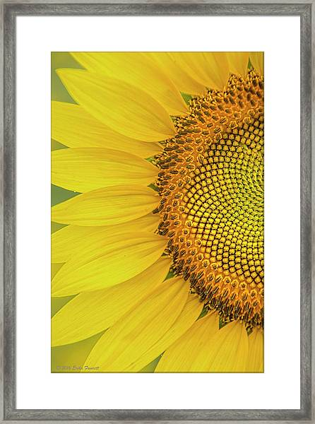 Sunflower Petals Framed Print