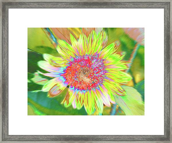 Framed Print featuring the photograph Sunnyside by Cris Fulton